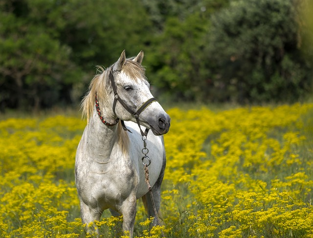 kůň na louce